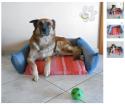 cuccia-da-interni-per-cane-animali Malice's Craftland - riciclo creativo - artigianato sostenibile italiano