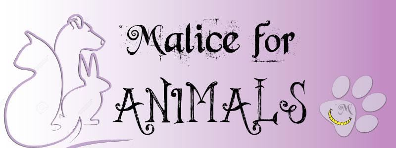 malice's craftland - malice for animals - aiutare animali randagi cane gatto cani gatti foggia